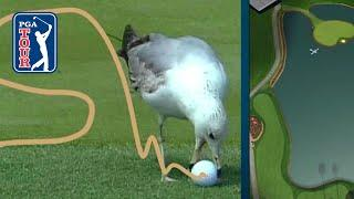 What's the ruling when a bird steals your golf ball?